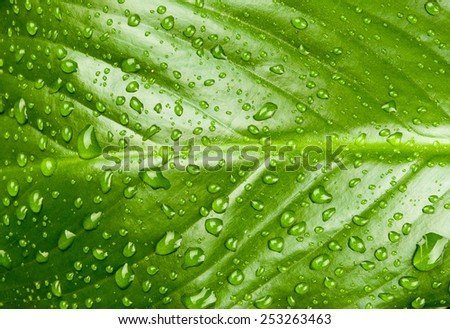 natural forest wood leaf with water drops