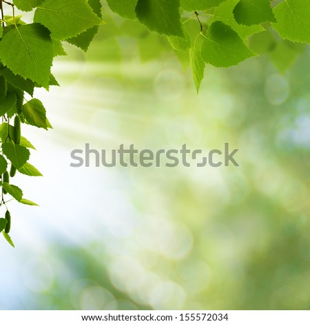 Natural freshness. Abstract environmental backgrounds for your design - stock photo