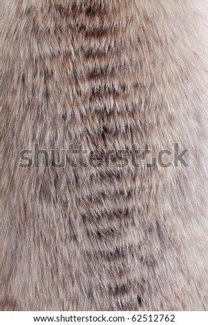 Natural fur background - stock photo