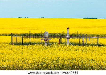 Natural gas wellheads in yellow blooming canola rapeseed field agricultural farmland in Alberta, Canada - stock photo