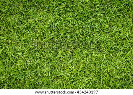Natural grass texture on top view