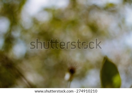 Natural green background. Natural Bokeh,blurred bokeh. Abstract nature background. Can be used for stationery, business cards, web and flyers. Unfocused image. - stock photo