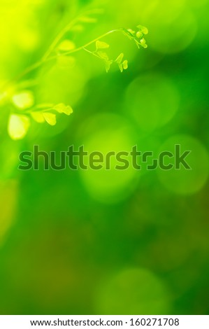 Natural green background, the bokeh effect  - stock photo