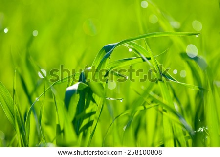 Natural green background with grass. Soft focus - stock photo