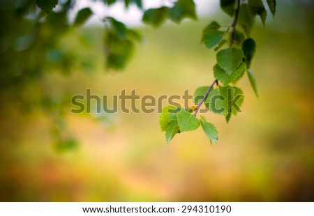 natural green background with selective focus on yellow