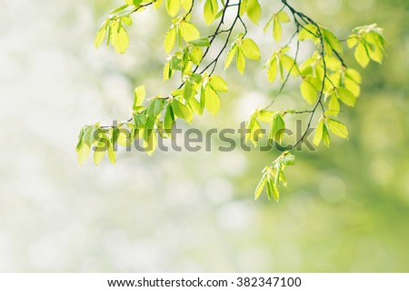 Natural green background with tree branches. Soft focus. Spring mood. - stock photo