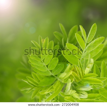 Natural green blurred background, soft focus - stock photo