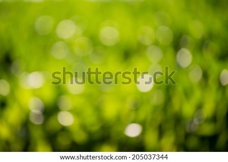 Natural green Bokeh, blurred bokeh - stock photo