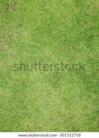 natural green grass background and texture.