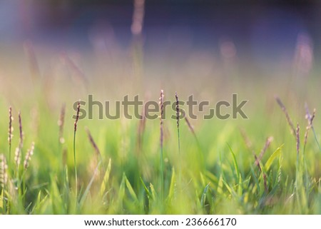 natural green grass background with selective focus and bokeh