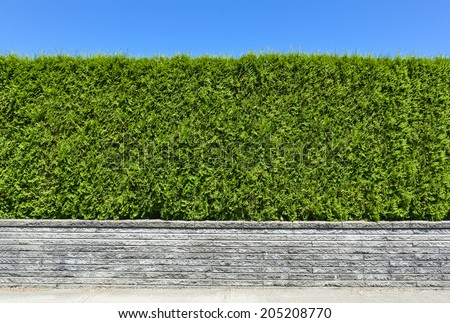 Natural green hedge with concrete pavement and blue sky background - stock photo
