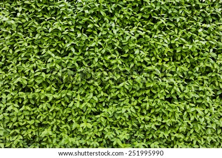 Natural green leaf texture - stock photo