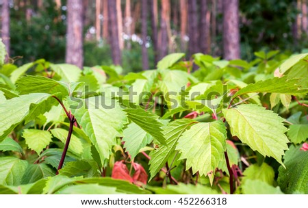 Natural green leaf texture against wood. Green leaf background. Green leaves wall background - stock photo