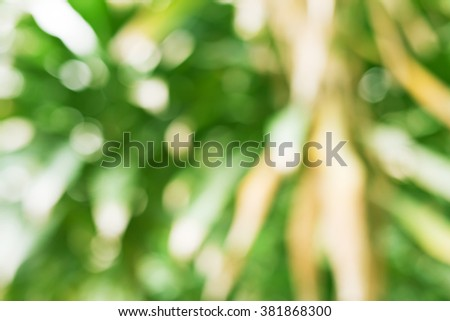 Natural Green Leaves Abstract Bokeh Background - stock photo