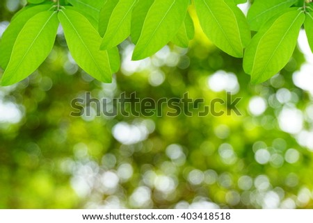Natural green leaves with blur bokeh spring or summer background, ecology concept