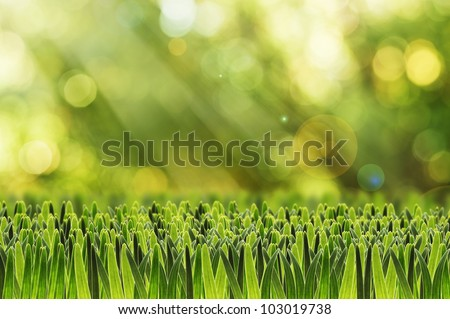natural green summer background with green grass on the foreground - stock photo