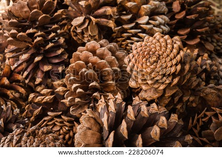 natural holiday background with pinecones grouped together - stock photo