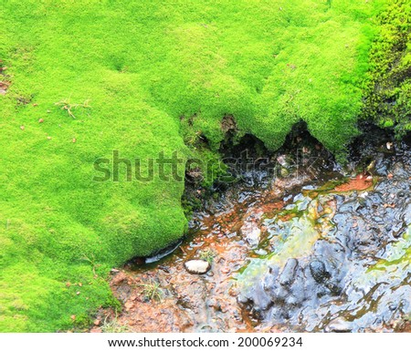 Natural hot spring and moss carpet around. Iceland. - stock photo