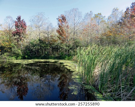 Natural Landscape at Six Mile Cypress Slough Preserve Fort Myers Florida - stock photo