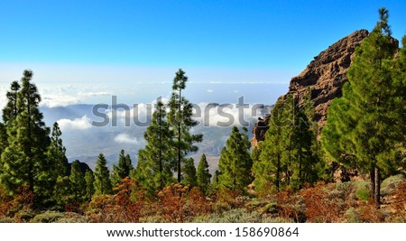 Natural landscape from the summit of Gran canaria, with canarian pine trees, clouds and radiant blue sky, Canary islands - stock photo