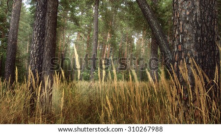 Natural landscape. Tall grass in a pine autumn forest. - stock photo