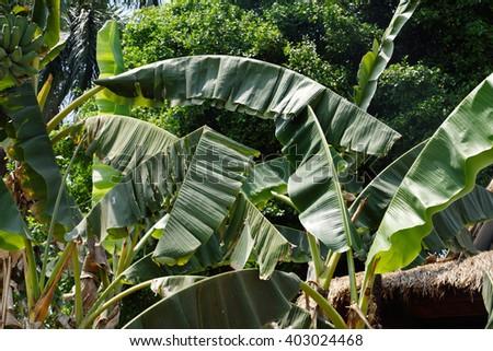 Natural Landscape Thailand  - stock photo