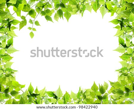Natural leaves border on white background - stock photo