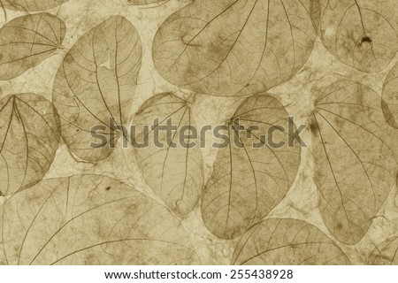 Natural leaves paper texture vintage closeup background