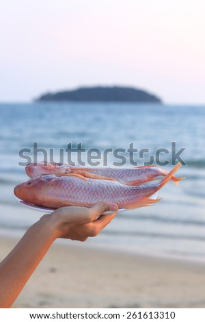 Natural light photo with shallow DOF of female hand holding plate of raw red snapper on ice with sea view background view 2 - stock photo