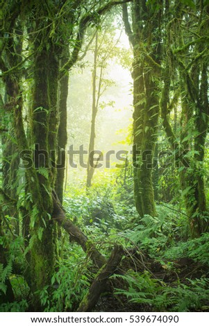 Natural lush rainforest And sunlight in the morning Abstract background style Tone Visual Concepts fable
