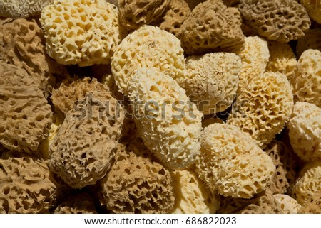 Natural marine sponges exposed in a street market, Zia Village, Kos Island.