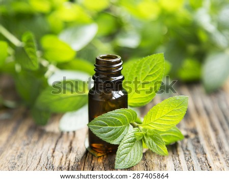 Natural Mint Essential Oil in a Glass Bottle with Fresh Mint Leaves - stock photo
