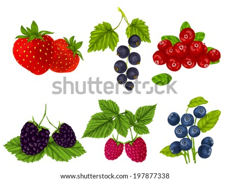 Natural organic berries set of strawberry blackberry cranberry isolated  illustration