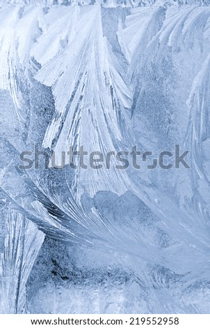 natural ornaments on Ice  - stock photo