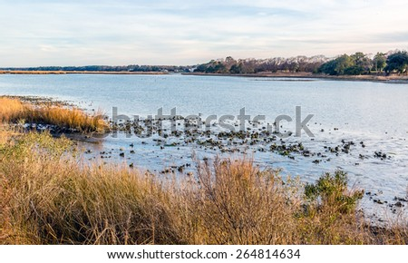 Natural oyster bed as seen at low tide in the Lynhaven Inlet off the Chesapeake Bay in Virginia Beach , Va. - stock photo