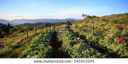 Natural panoramic landscape - stock photo