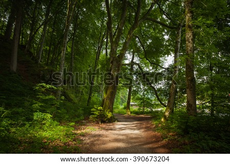Natural path in the forest - stock photo