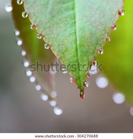 Natural Pattern Formed by Dews on Leaves in the Morning, Nature Theme - stock photo