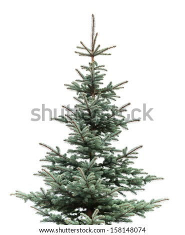 Natural photo of young fir tree isolated on white background - stock photo