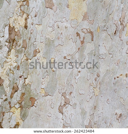 Natural plane tree bark abstract background - stock photo