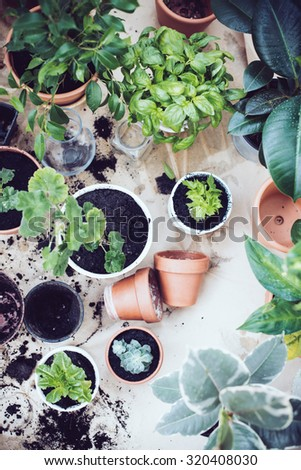 Natural plants in pots, green garden on a balcony. Urban gardening, home planting. - stock photo