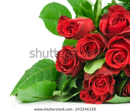 Natural roses background - stock photo