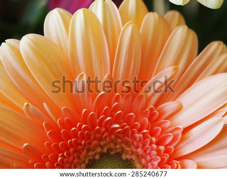 Natural single flora background texture