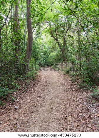 Natural small trail to the high mountain in the national park. - stock photo