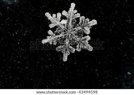 natural snow flake on abstract background - stock photo