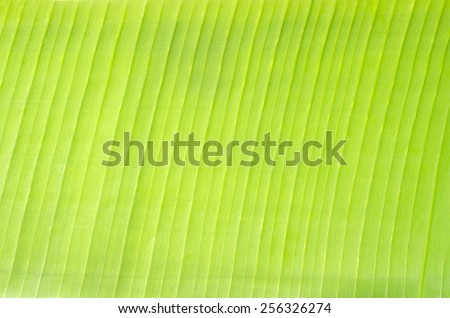 Natural Soft Green Banana Leaf Plate for Texture Background - stock photo