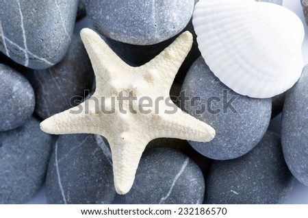 Natural spa elements- seashell with starshell and stones on white  - stock photo