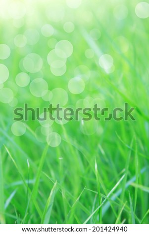 Natural spring and summer background with selective focus and copyspace - stock photo