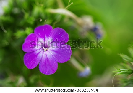 Natural summer blurred background with lilac flowers, toned image, shallow depth of field