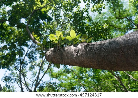 Natural tree leaf